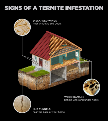 What Are The Early Warning Signs Of A Termite Infestation Metamorfoza Furniture